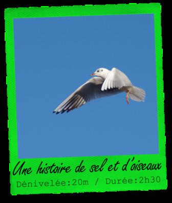 oiseauxréduit